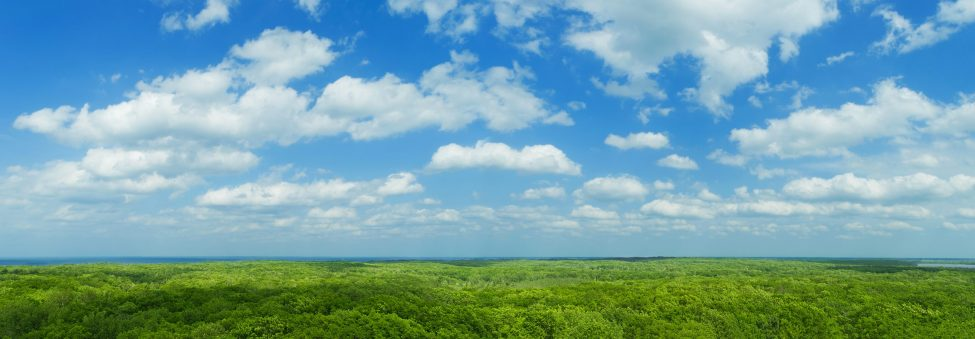 Blue,Sky,Panorama,With,Clouds,Over,Tops,Of,Green,Trees